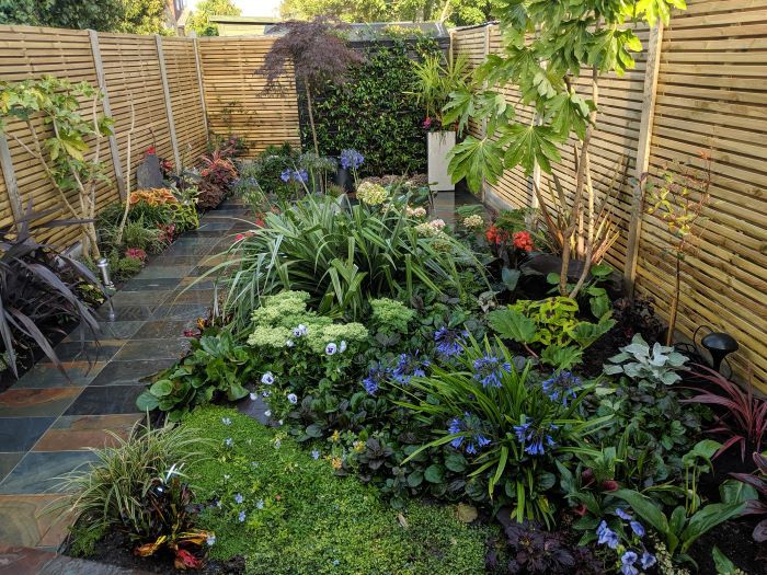 garden transformation from an unkempt garden to one that has changed dramatically
